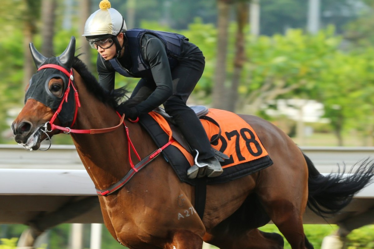 Ever Laugh gallops on the all-weather track last week. Photos: Kenneth Chan
