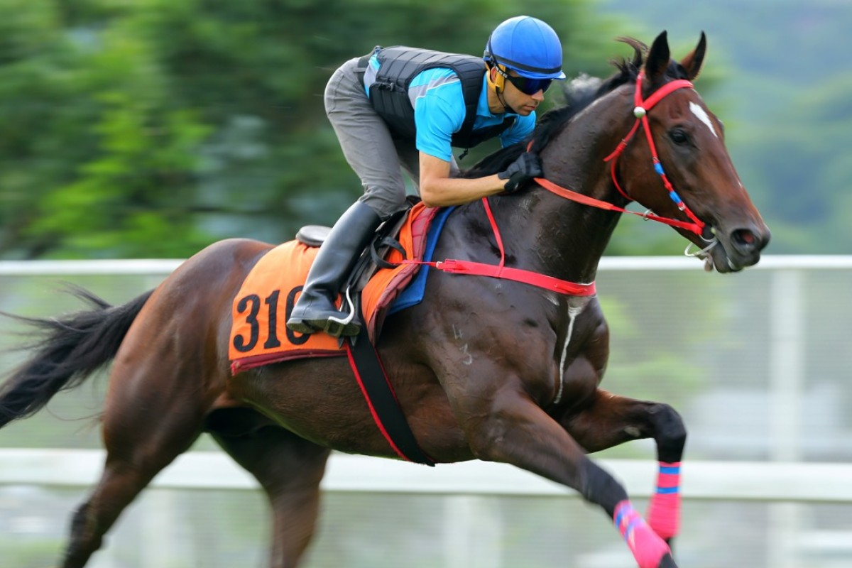 Travel Emperor gallops strongly on the turf on Thursday morning ahead of his Sunday debut, clocking 22.8 seconds for his final 400m down the back straight. Photos: Kenneth Chan.