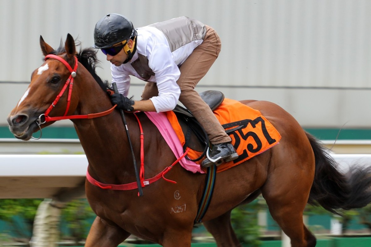 Ivoctory cruises around in a 1,050 metre dirt trial on July 7 at Sha Tin. Photos: Kenneth Chan.