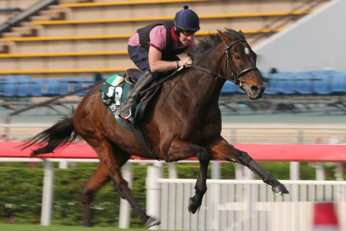 Hong Kong Vase runner Max Dynamite amazes trackwatchers with his final sprint. Photos: Kenneth Chan