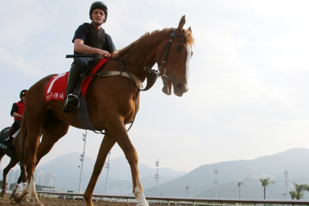 Hong Kong Cup runner Robin Of Navan going back to his stable after gallop on the all-weather track at Sha Tin. Photos: Kenneth Chan