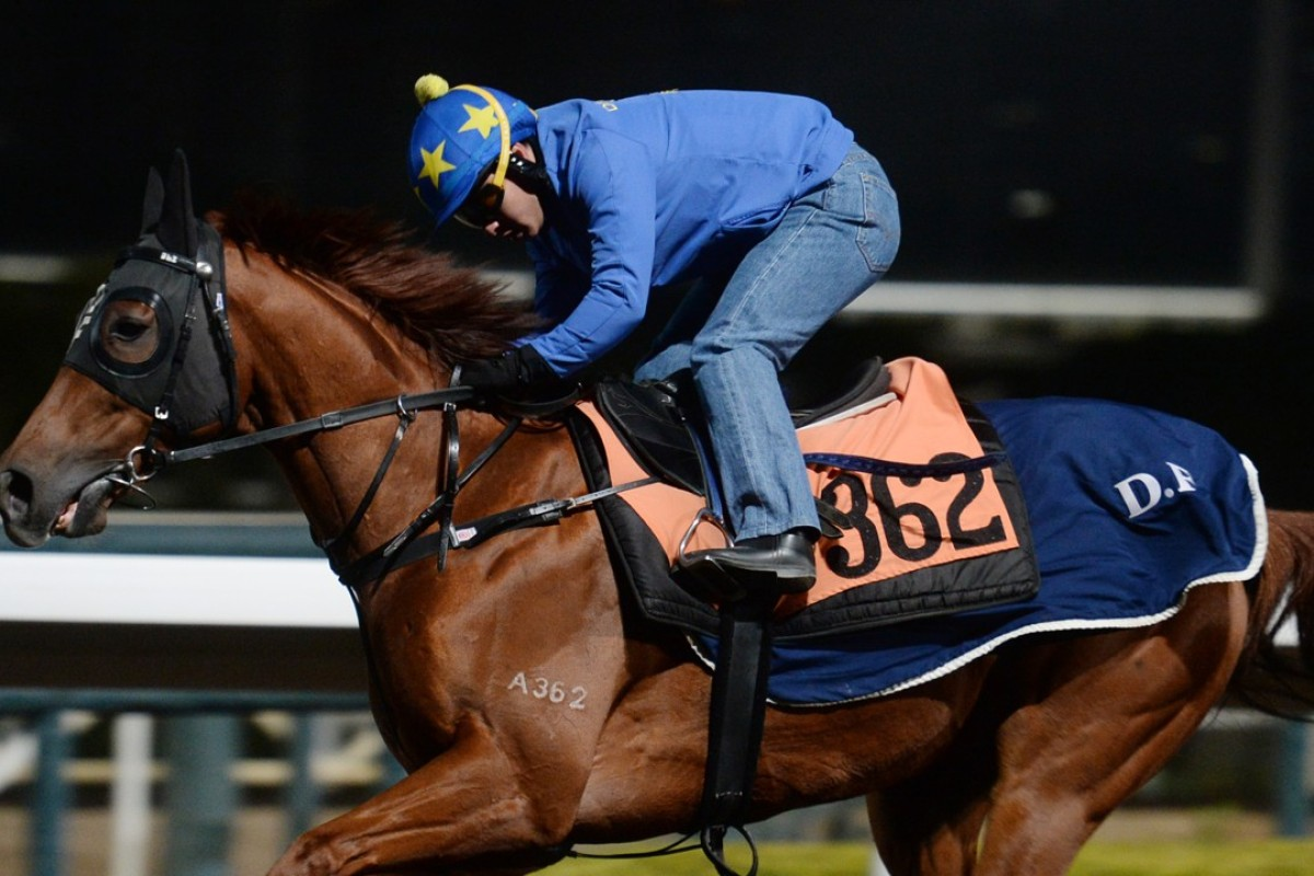 Sleep Education gallops on the all-weather track. Photo: Kenneth Chan