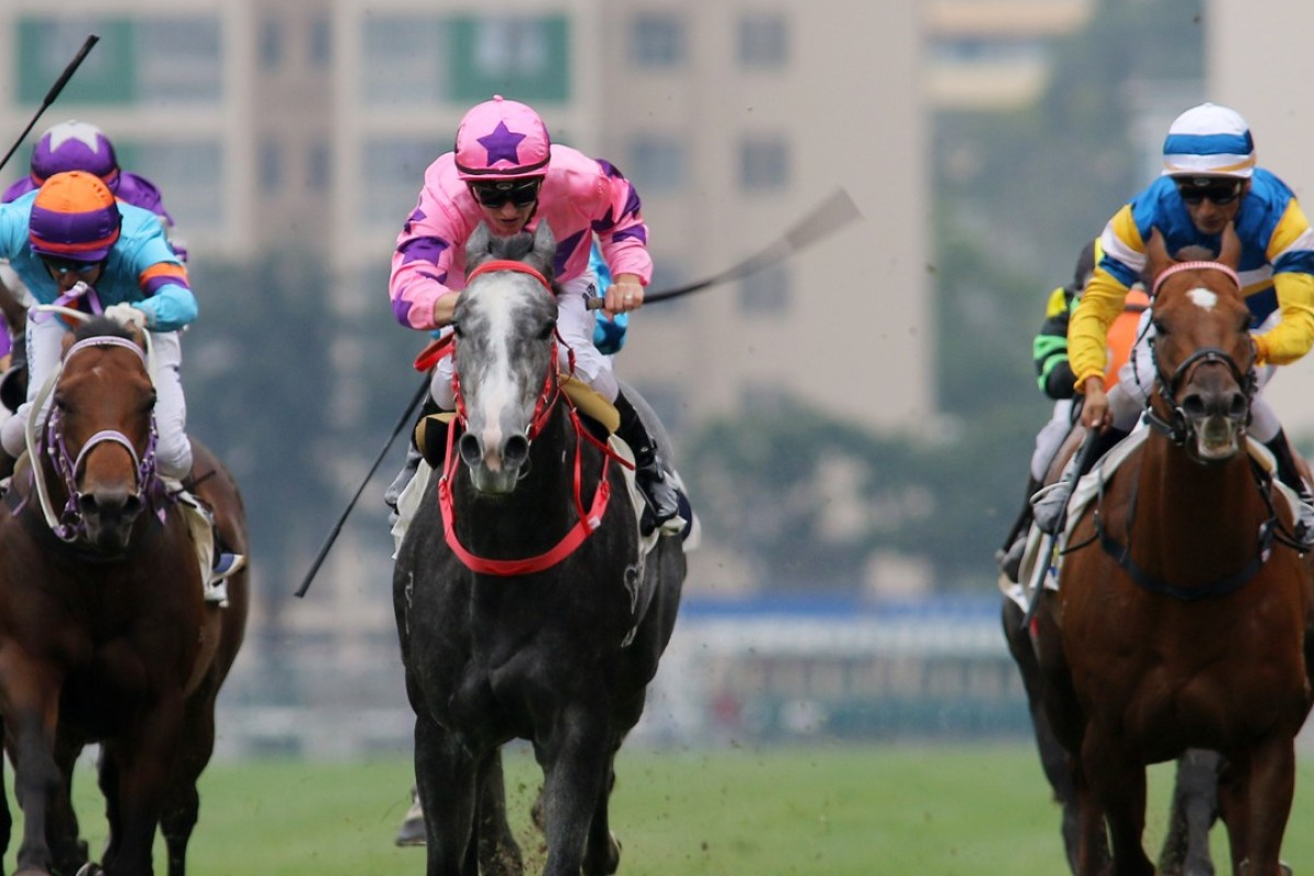Dances With Dragon (left) finishes third to Hot King Prawn. Photos: Kenneth Chan