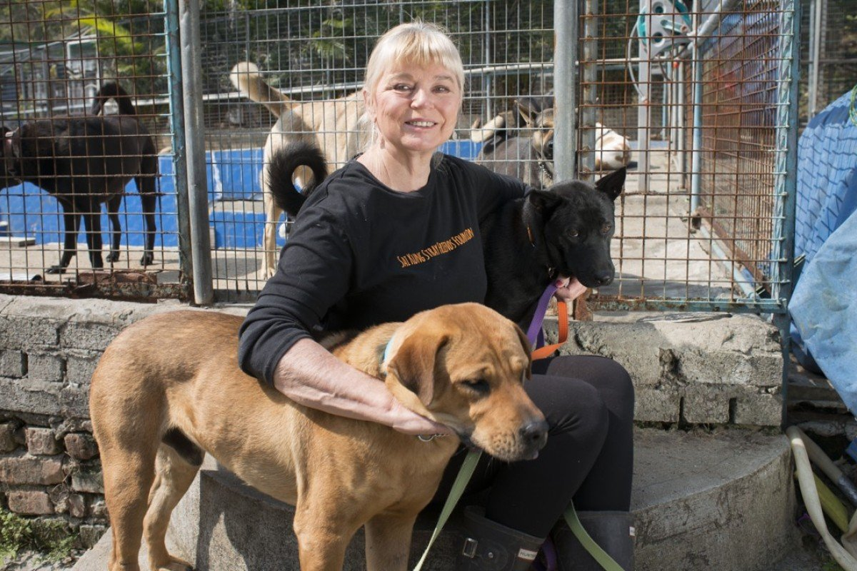 Naralle Pamuk With Some Of Her Dogs At Sai Kung Stray Friends Picture Antony
