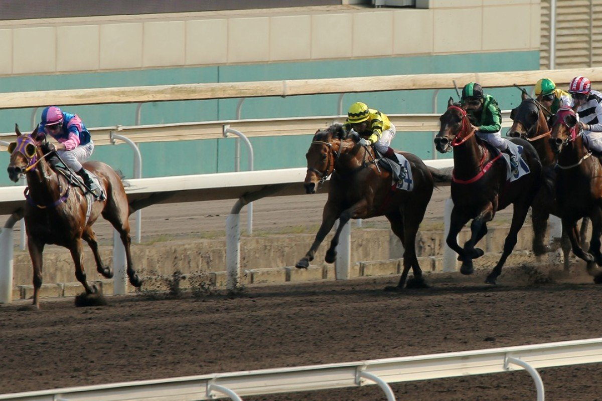 Perpetual Treasure (left) bolts clear of his rivals on the all-weather track at Sha Tin on Sunday. Photos: Kenneth Chan