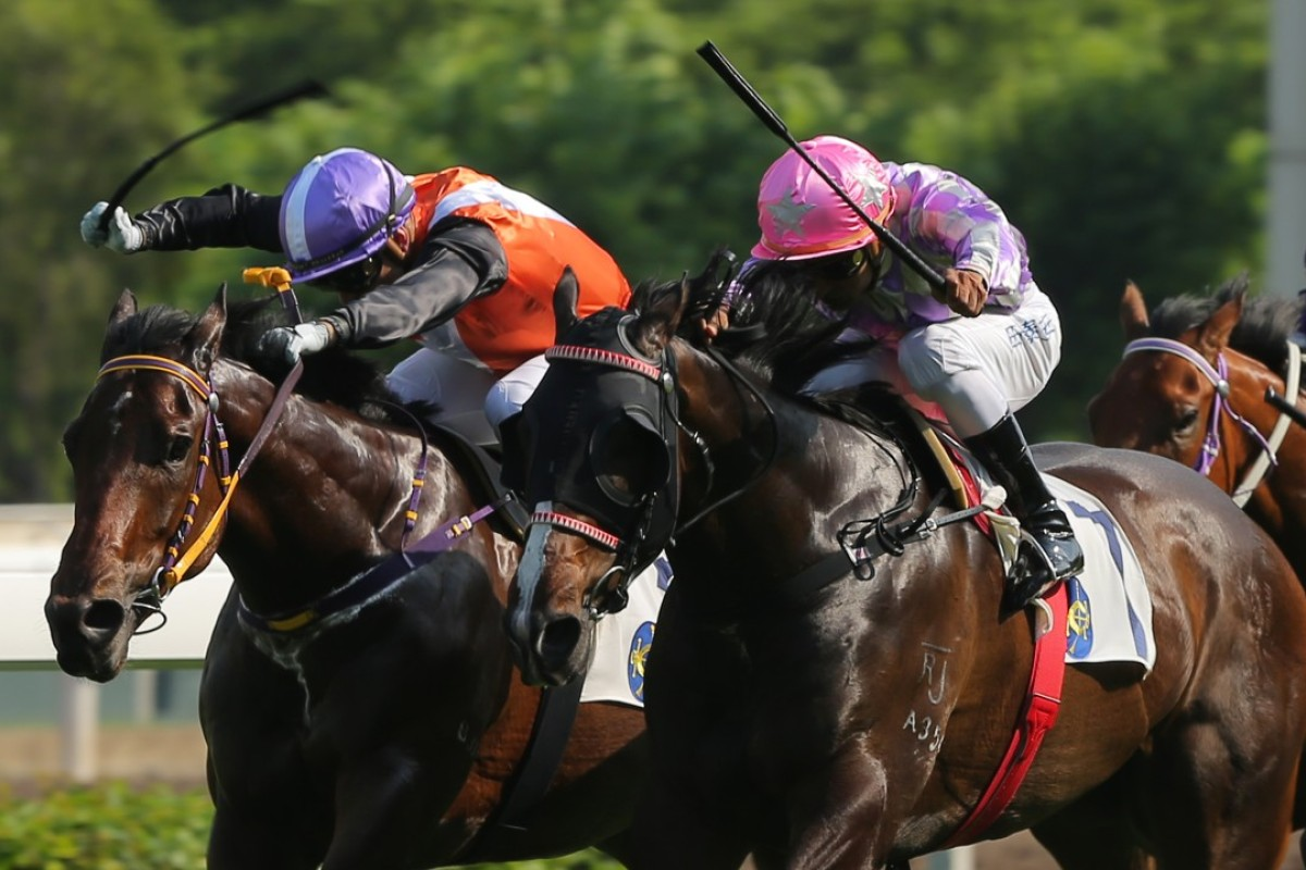 Cruising (left) finishes second to Alcari (right) at Sha Tin on Sunday. Photo: Kenneth Chan