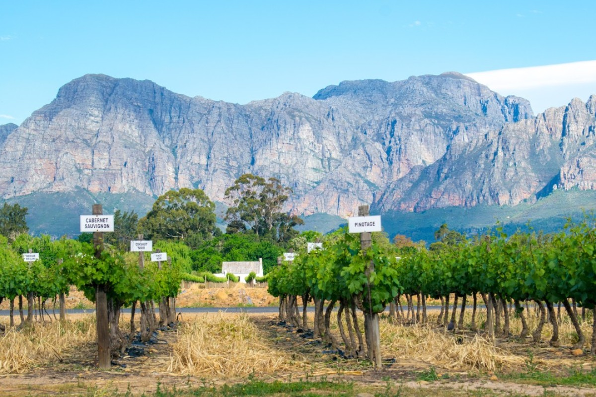 Vineyards in South Africa's Western Cape, where pinotage vines thrive. Picture: Alamy