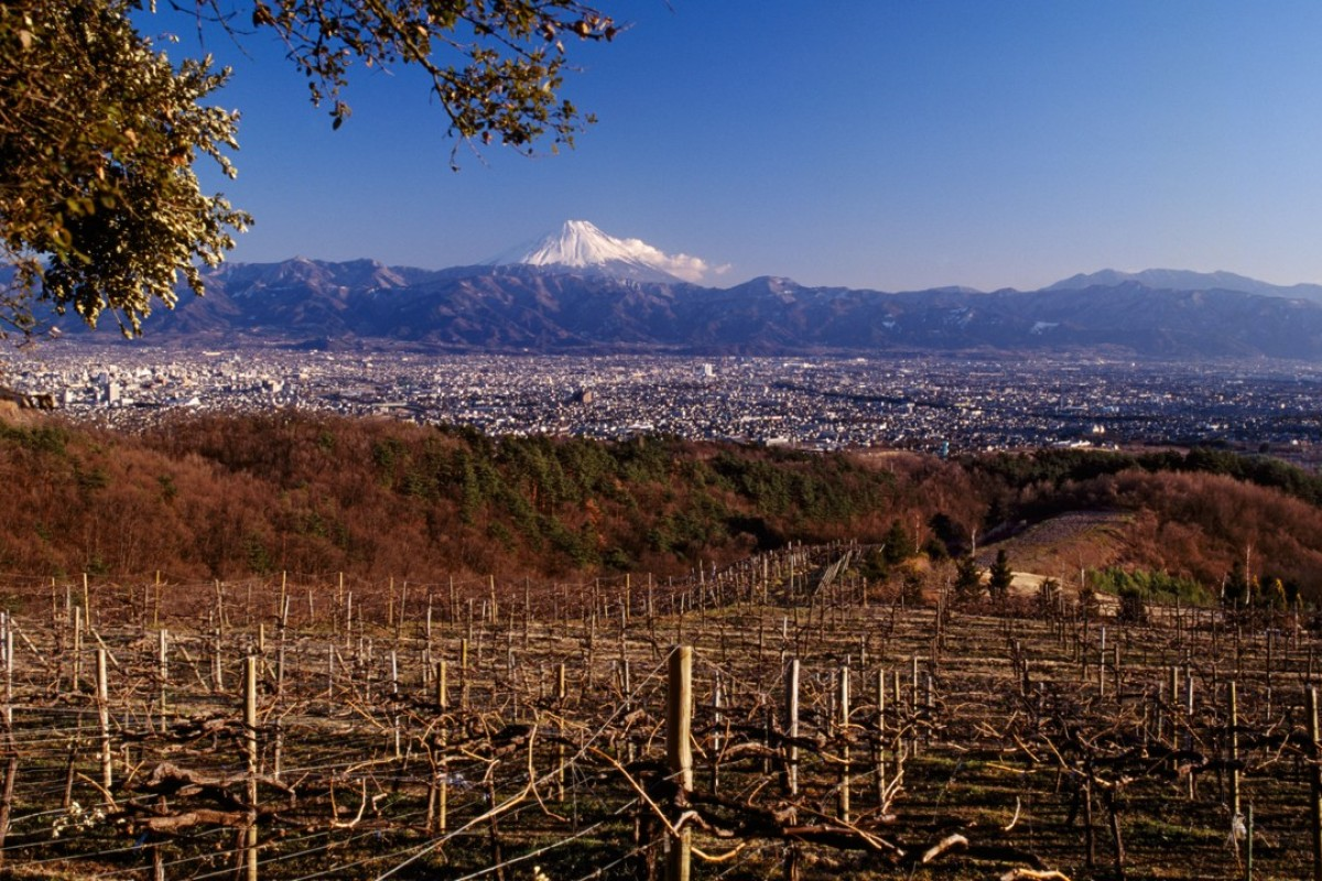 The vineyard at Suntory's Tomi No Oka winery in Yamanashi prefecture, Japan, with snow-capped Mount Fuji in the distance. Picture: Alamy