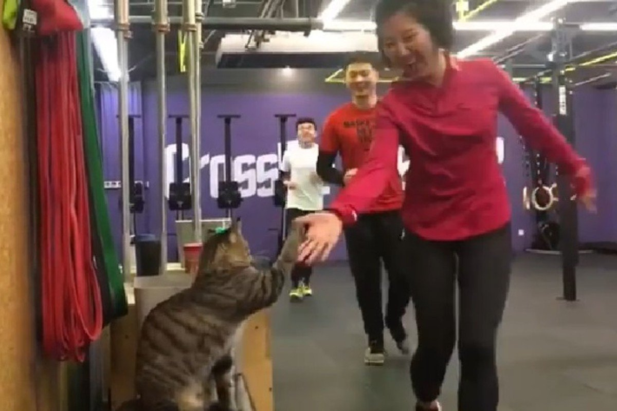 A cat high-fives CrossFitters at the CrossFit Pepper gym in China. Photo: Instagram/crossfitchina