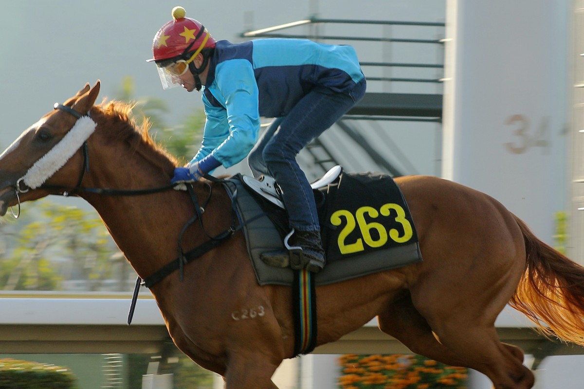 Douglas Whyte steers Sunny Speed during a barrier trial on Tuesday morning. Photos: Kenneth Chan