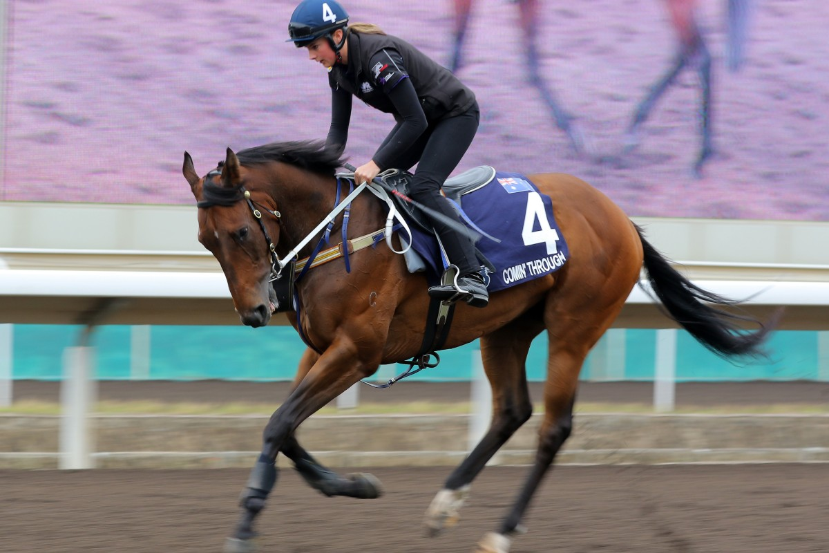 Comin' Through prepares for the Hong Kong Mile at Sha Tin in December. Photos: Kenneth Chan