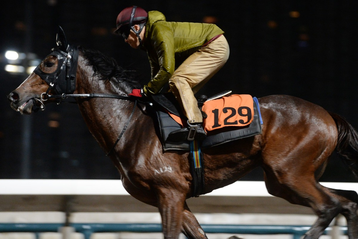 Helene Charisma gallops on the Sha Tin all-weather track earlier this season. Photos: Kenneth Chan