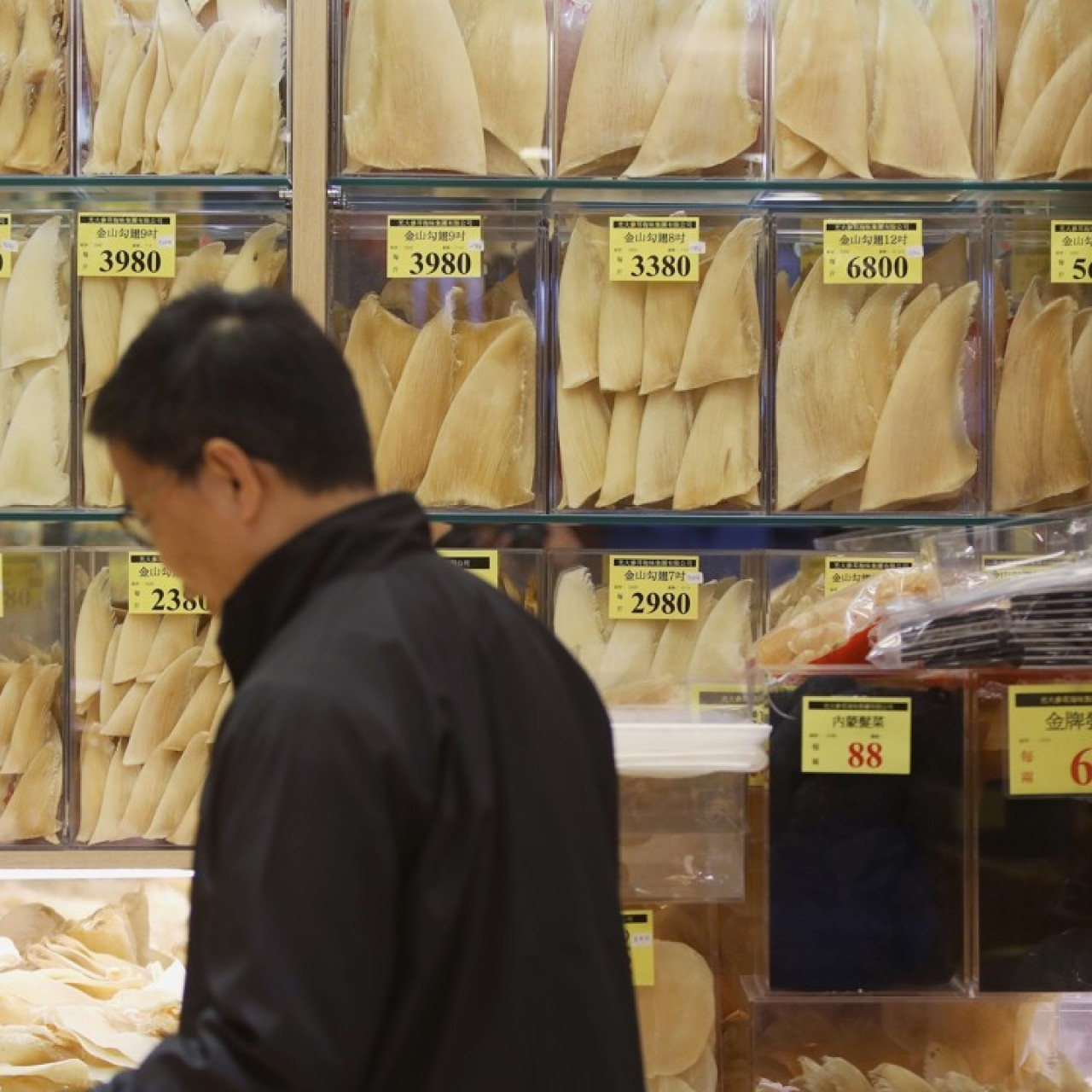 d46b53275152 Hong Kong shark fin imports 'halved since 2007', thanks to tighter ...