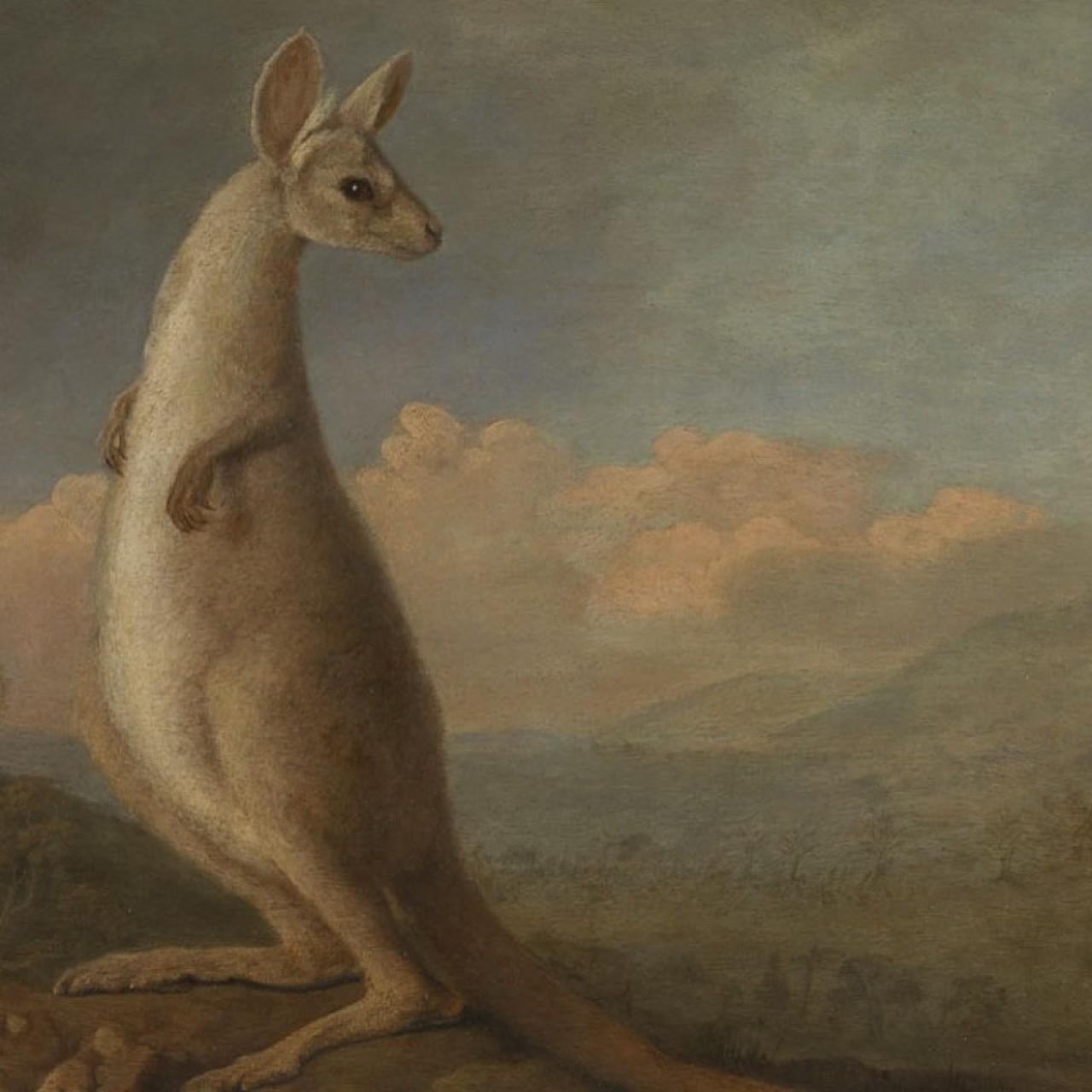 Myth busting: where the word 'kangaroo' really came from – spoiler